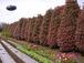 加藤花園植物場