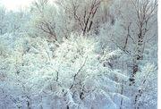 雪【Snow】