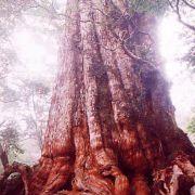 栃木から世界中の不思議好きへ