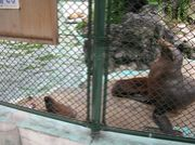 堺市の保育園