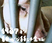 1987年10月11日生まれ集合!!!