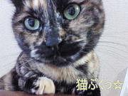猫ぷくっ☆