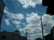 写真・自然・散歩(大阪)