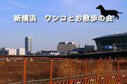 シンヨコ-セレブ犬の会