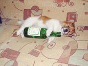 飲みますが!何か!?