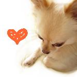 ANIMALRIGHTS・愛するココロ