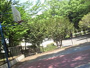 緑の相談所バスケット公園