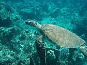 海洋・水圏生物が好きな人の部屋