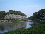 名城公園を走ろう!