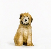 We Love Terriers !!