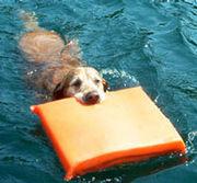 救助犬に助けられたい