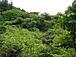 山林など土地の共同購入