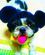 I♥シーズー犬