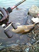 多摩川爆釣伝説擬餌釣遊会
