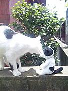 幸せを呼ぶ猫 ハートのカラコ