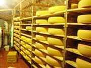 チーズお気楽評論家