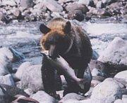 鮭の生きざまに敬礼