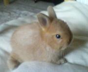 ウサギ自慢