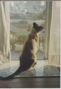 Cosmo Cat Club( 猫同好会)