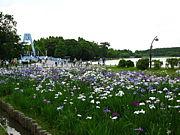 東京都立 水元公園