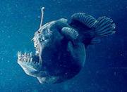 深海探査隊
