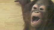 ♪王子動物園ニュース♪