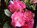 *☆花とベランダとお庭☆*