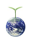 ecoists