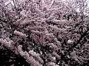 春爛漫花見の宴@上野公園