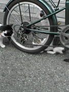 地域猫撲滅推進委員会