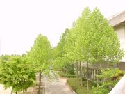 大阪府立枚方西高等学校