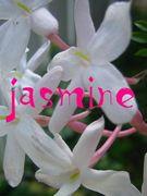女の子の会 jasmine