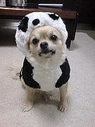 愛犬がTOP画像