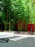 SF Landscape Architecture