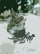 『またたび』 埼玉猫好きコミュ