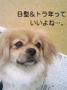 B型&トラ年!!