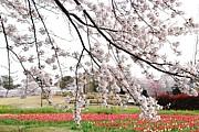大宮花の丘公園
