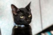 ★黒猫愛好家たちの集い