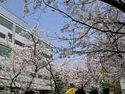 武蔵工業大学入学★2008