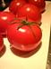 TOMATO tomato トマト とまと