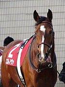 シャイニングピサ(競走馬)