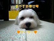 SWEET☆マルチーズ