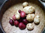 奈良の畑で食育してみるかい?
