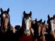 北海道で馬に関わる人達へ