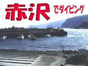 赤沢でダイビング!