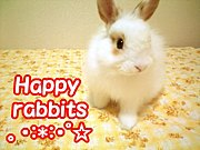 Happy rabbits 。・:*:・゜☆