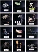 世界の珍獣