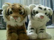 WWFのヌイグルミが好き