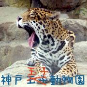 王子動物園こと玉子動物園