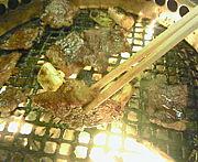岐阜の美味しい焼肉屋さん^ロ^